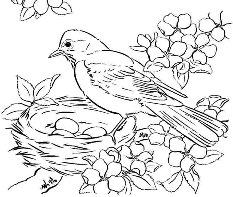 Alphabet F Coloring Page_bird Coloring Pages For Preschoolers on Best I Images On Pinterest Alphabet Crafts And